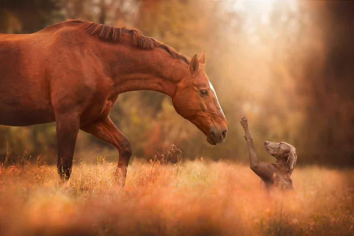 dierenwelzijn-hond-paard