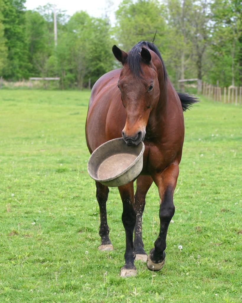 Senioren paard